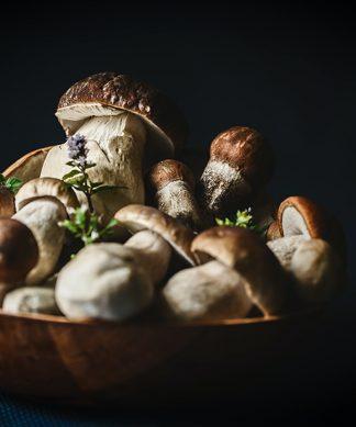 Cogumelos e Derivados